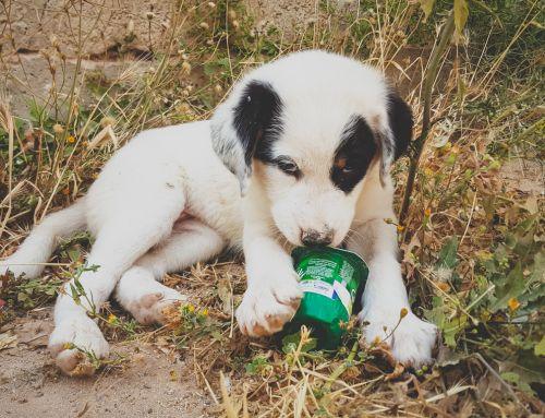 Morocco Animal Aid (Marokko)