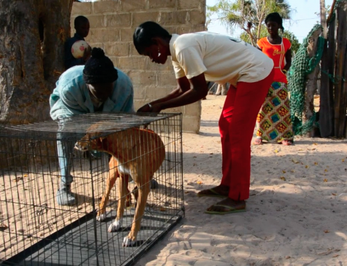 VetClinic Gambia