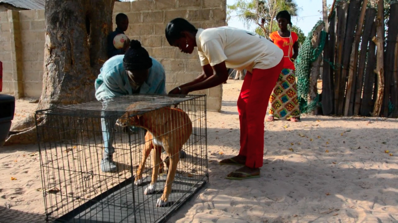 Take, Neuter, Return - VetClinic Gambia Touray & Meyer